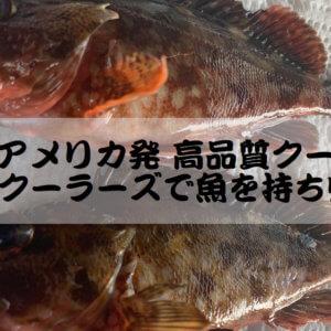 【噂のアメリカ発 高品質クーラー】AOクーラーズで魚を持ち帰る