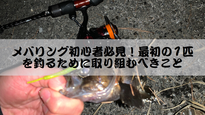【メバリング初心者必見!】最初の1匹を釣るために取り組むべきこと